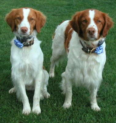 winston and madison groomed and proud to look so handsome
